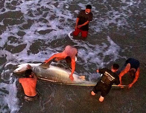 12 Foot Shark Caught in Texas