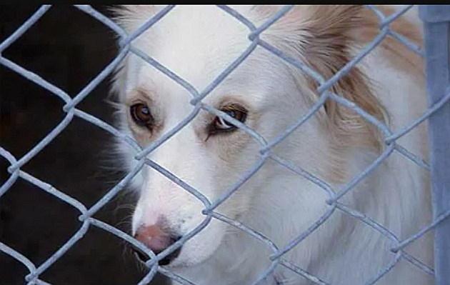 Rescue dog white