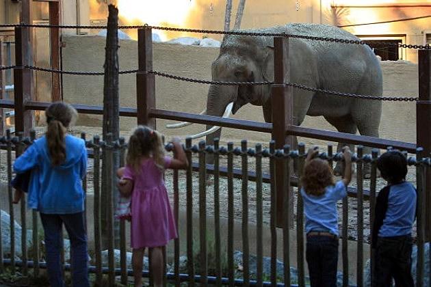 elephant and kids