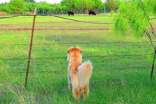Cowboy at his new home