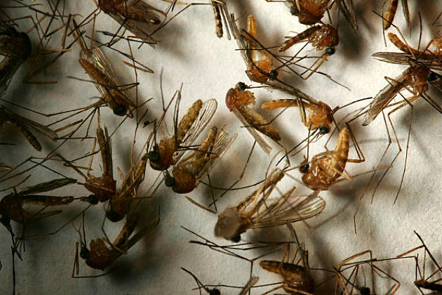 Mosquitoes, West Nile Virus