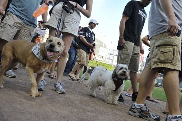 Dog Day, fans walk their dogs on the field
